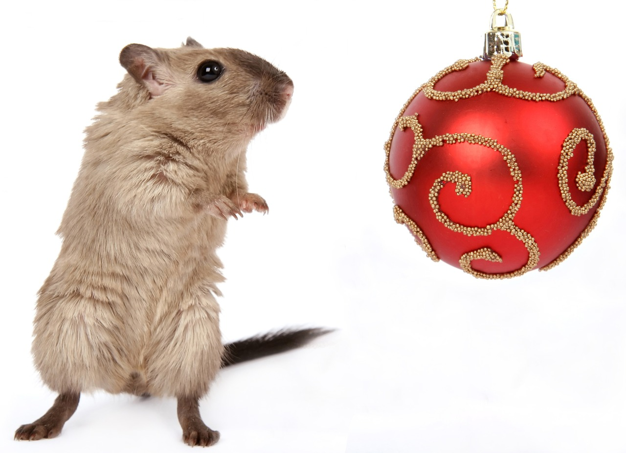 christmas pet Critter Caretakers Pet Services When Do Friends, Family and the Holidays Not Go Together?