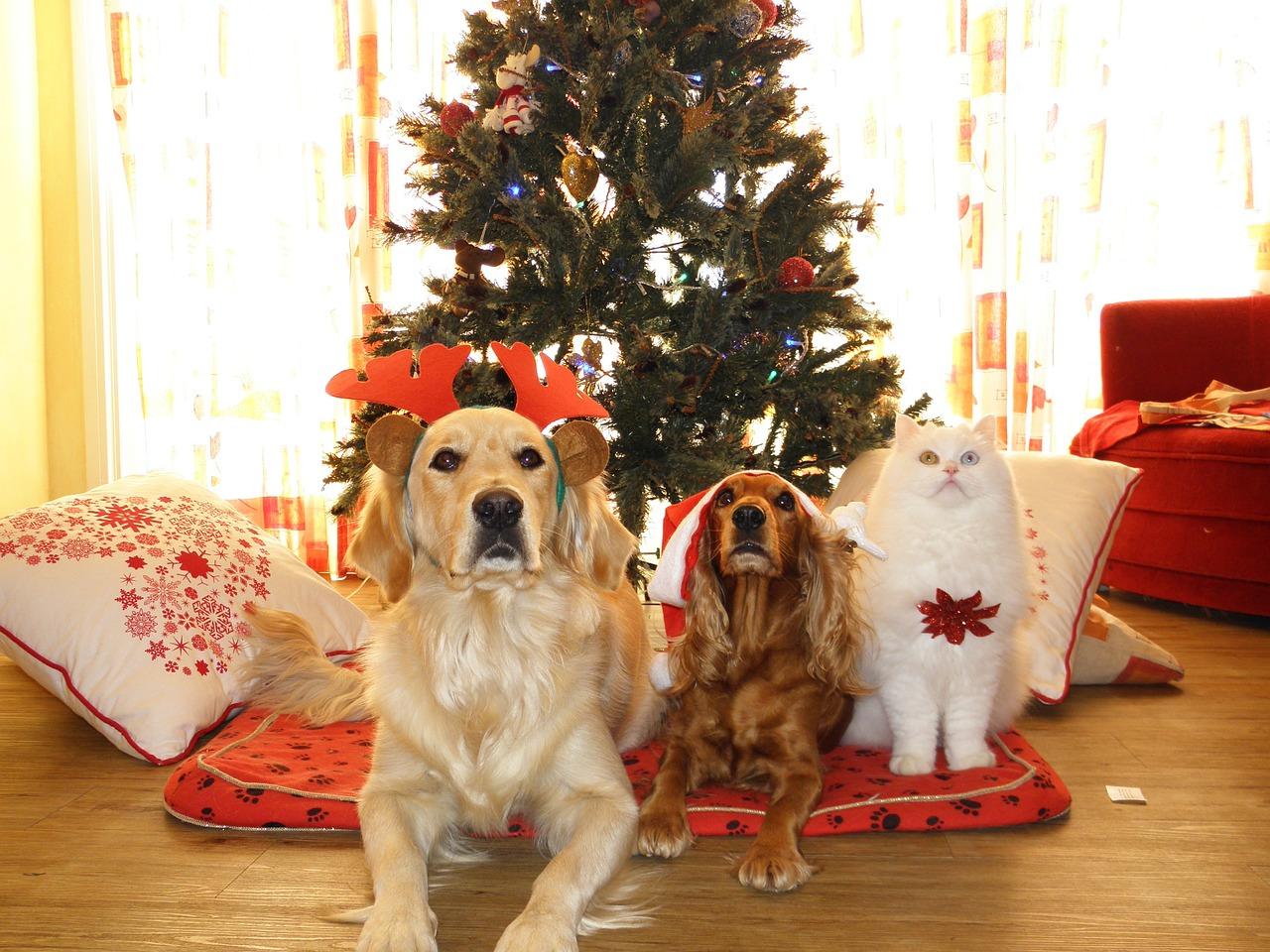 pet cat dog christmas Critter Caretakers Pet Services Christmas Lists: Dog vs. Cat