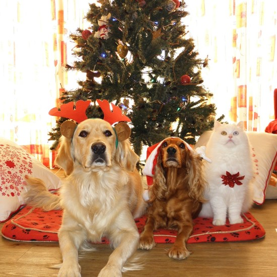 pet cat dog christmas Critter Caretakers Pet Services What Makes This Tempe Pet Sitting Company the Best?
