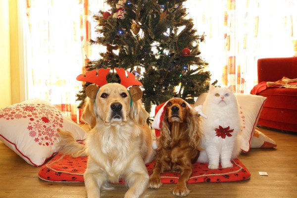 pet cat dog christmas Critter Caretakers Pet Services Christmas Lists: Dog vs. Cat