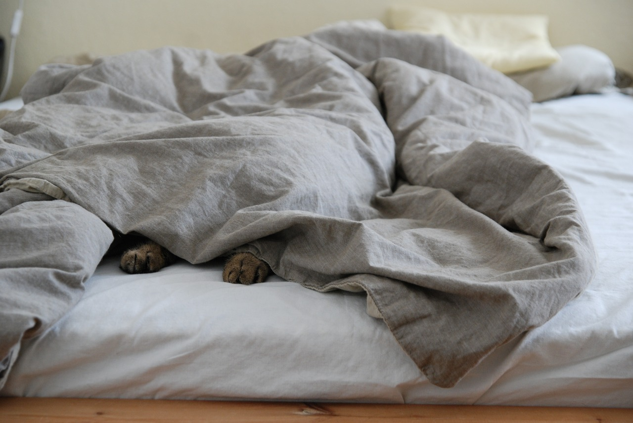 cat hiding under duvet sheet Critter Caretakers Pet Services Do You Really Want to Board Your Cat?