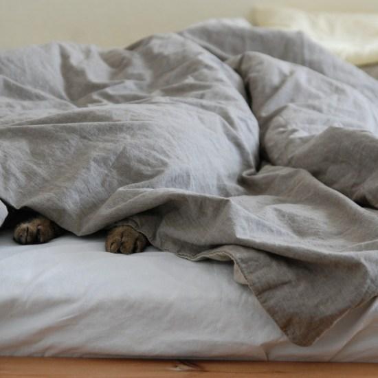 cat hiding under duvet sheet Critter Caretakers Pet Services Youngevity Breath B-Clean Canine Breath Foam