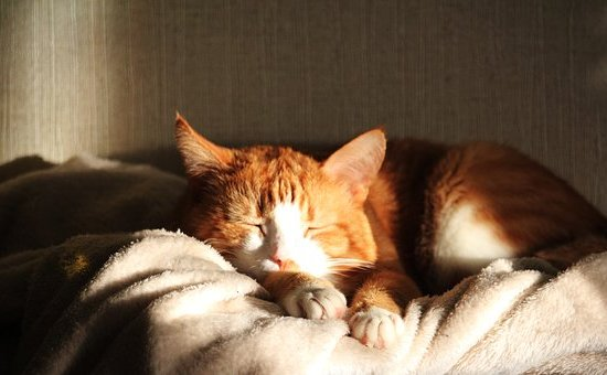 hot cat sleeping sun Critter Caretakers Pet Services Youngevity Odor B-Gone Litter Box Odor Eliminator