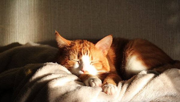 hot cat sleeping sun Critter Caretakers Pet Services Can Cats Get Heatstroke?
