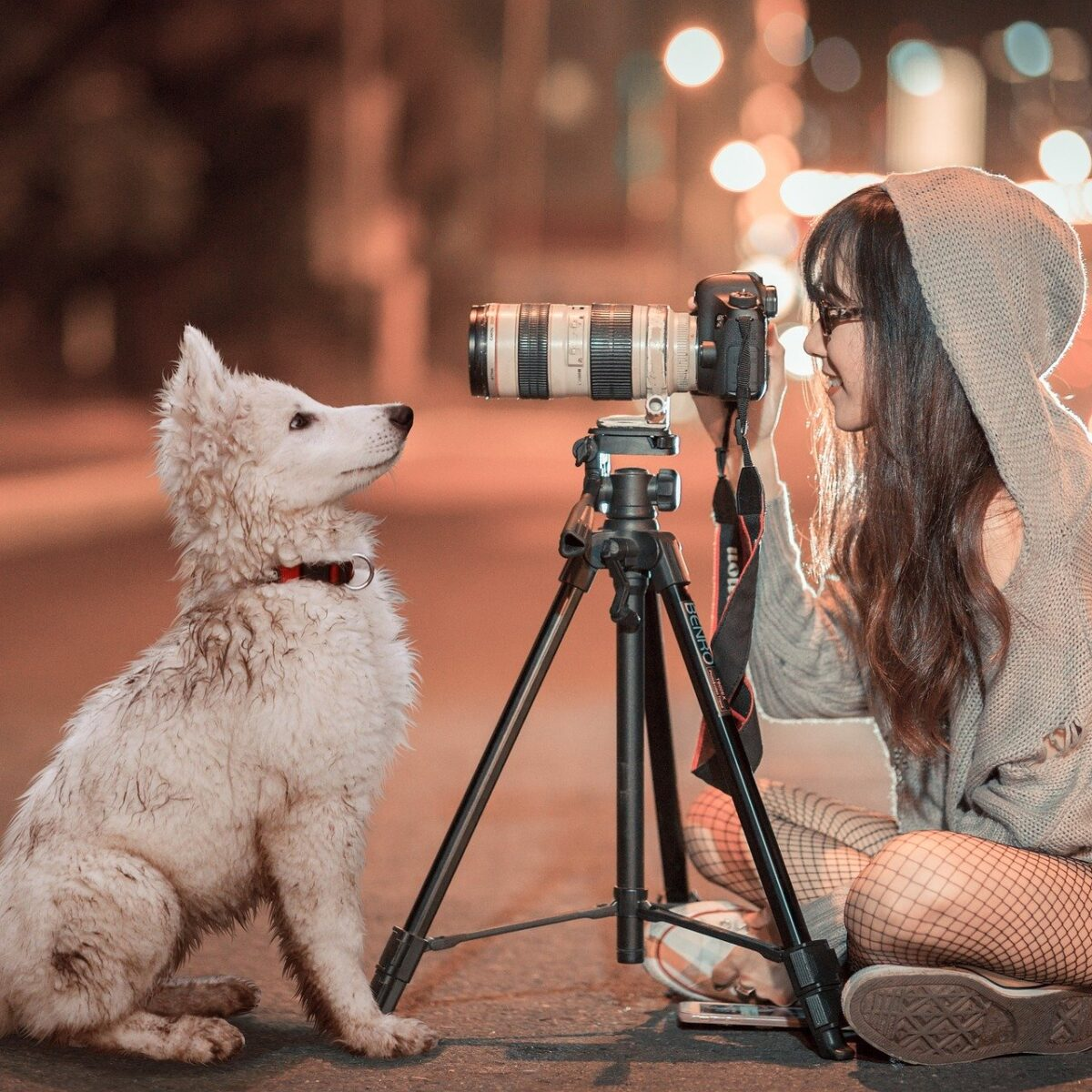 girl taking photo of dog on street