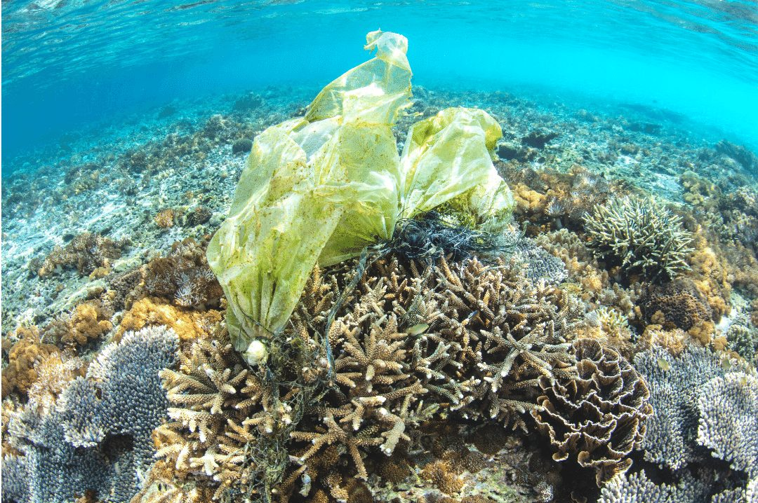 coral reef dying from plastic