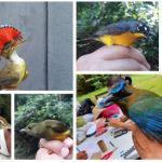 Tres especies de aves que nuca se habían reportado en esta zona, son estudiadas por expertos en Bocas del Polochic. (Foto: Eduardo Sam)
