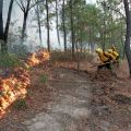 Alejandro Giammattei dijo que Honduras enviará un helicóptero para ayudar a mitigar los incendios forestales. (Foto: Archivo)