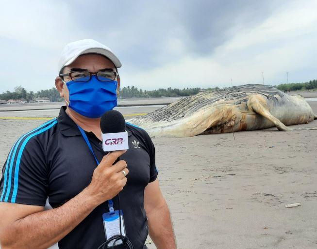 Cristian Soto, corresponsal de CRN Noticias, durante la cobertura de la ballena muerta en Retalhuleu. (Foto: CRN Noticias)