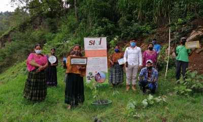 El INAB realiza una jornada de reforestación en Alta y Baja Verapaz, donde ha sembrado eucalipto, pino, ciprés y cedro. (Foto: Eduardo Sam)