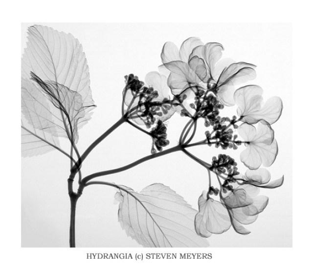sandra almeida diseño gráfico vigo radiografias de plantas12