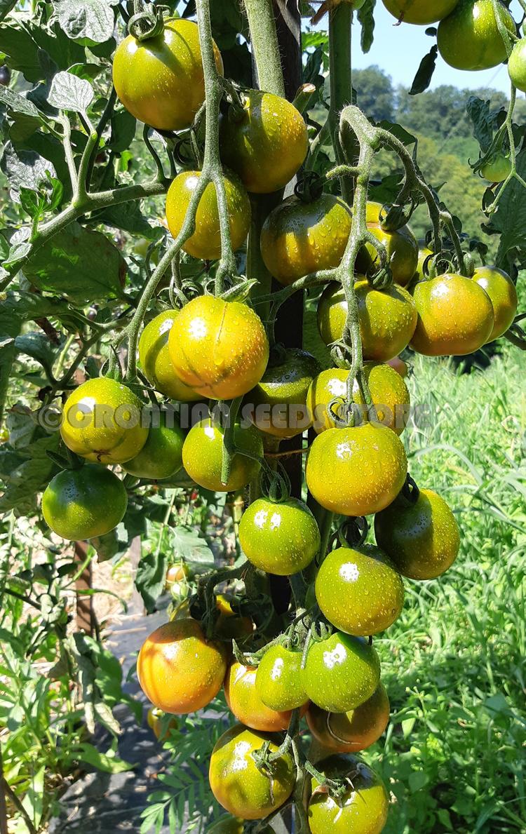 Green Fruit Outside Inside Red Black Seeds