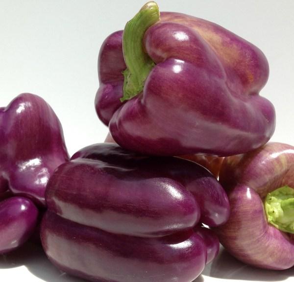 Black Purple peppers Purple Sweet Bell Pepper LILAC