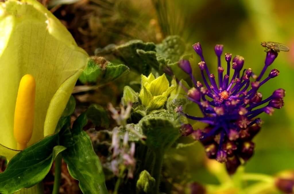 Botanical Garden in Makarska