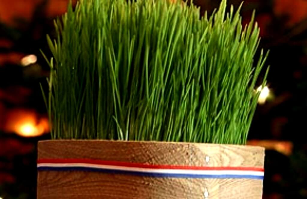 Christmas Wheat