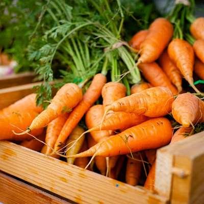 légumes-fruits-bio-biscuits-chien-crocandiz