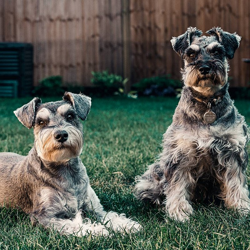 choisir-chien-mâme-femelle-blog-crocandiz