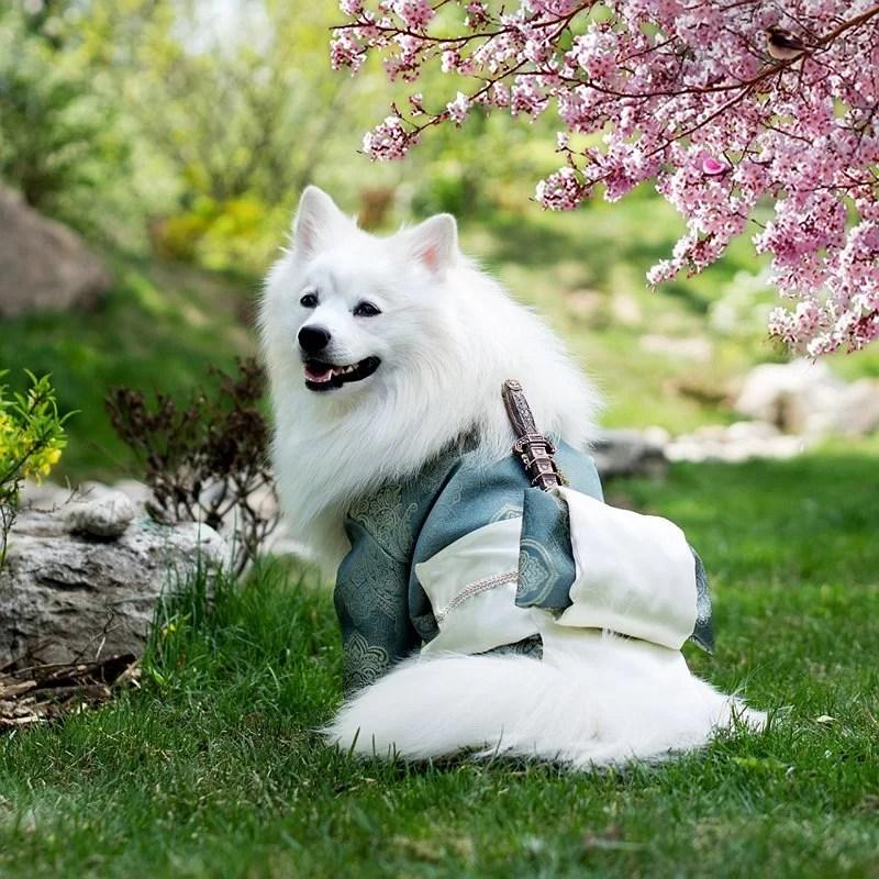 chien-vacances-été-loisirs