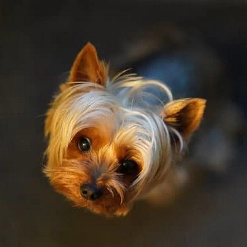 pâtisserie-petit-chien-crocandiz