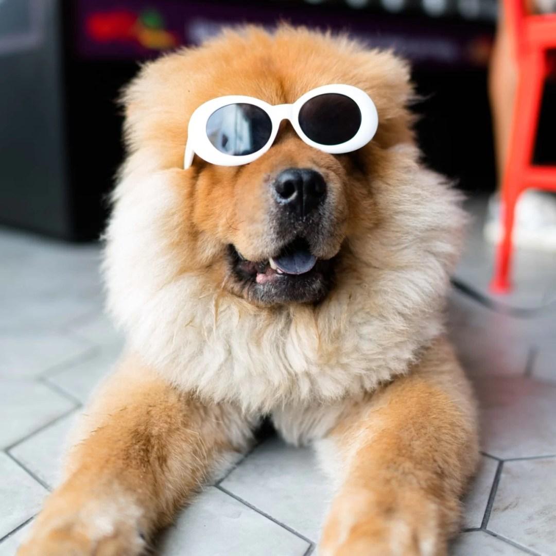 chien-boutique-luxe