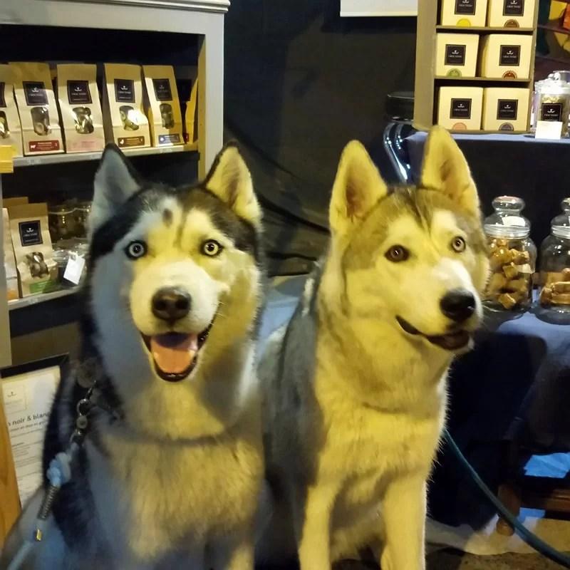Oslo-Meyko-chiens-husky-stand-crocandiz