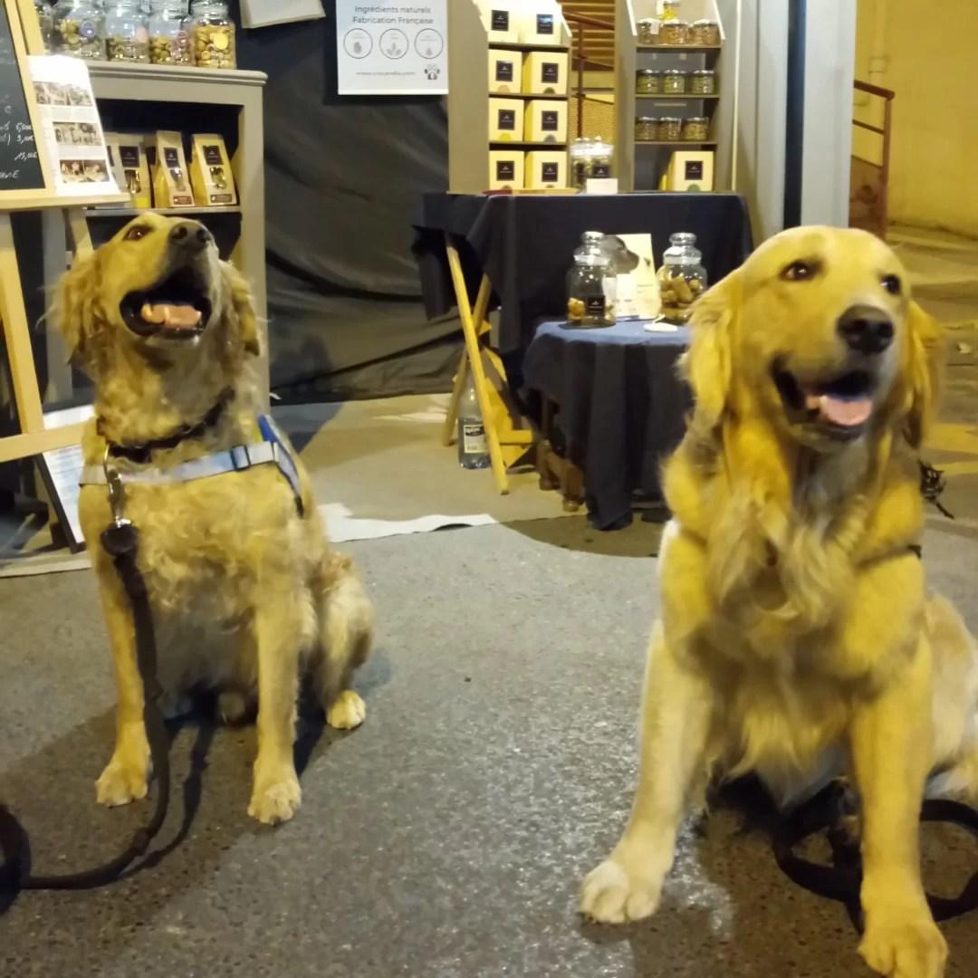 golden-retriever-chiens-stand-crocandiz