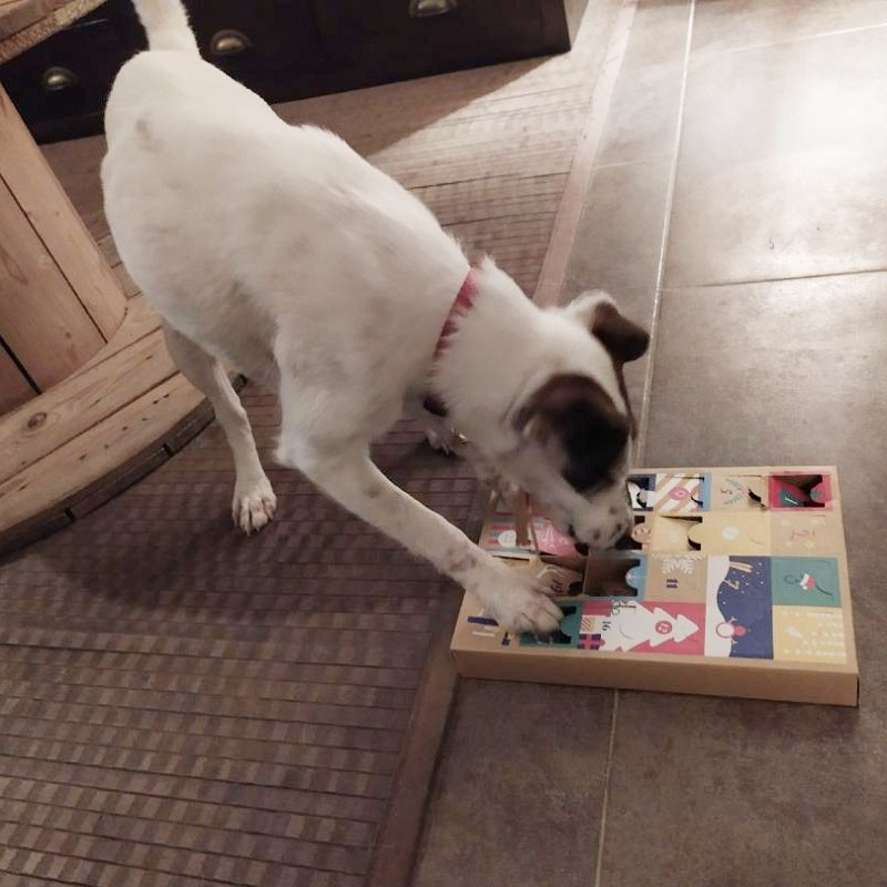 prunelle-club-chien-crocandiz