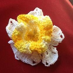cro daffodil 0614