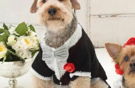 Tuxedo Dog Pattern