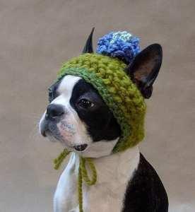 dog beani crochet pattern
