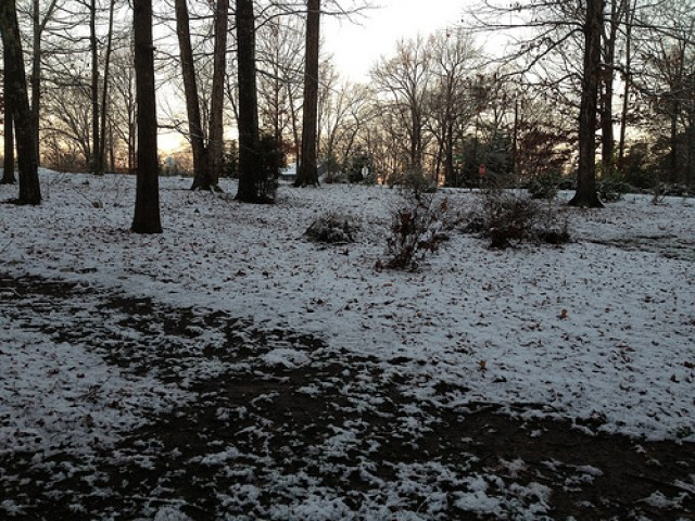 A snowy January day in Raleigh, North Carolina