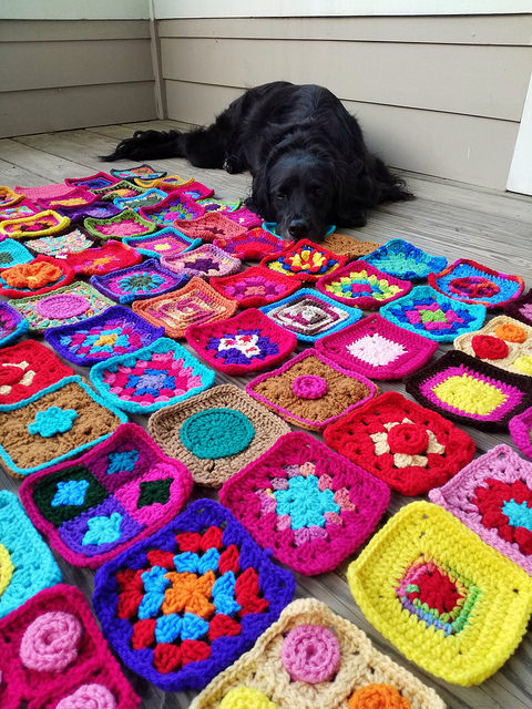 My dog Clooney oversees the crochet rehab efforts