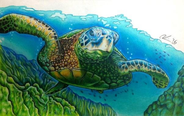 Sea turtle (La Tortuga). Pencil crayon on printer paper. 2016