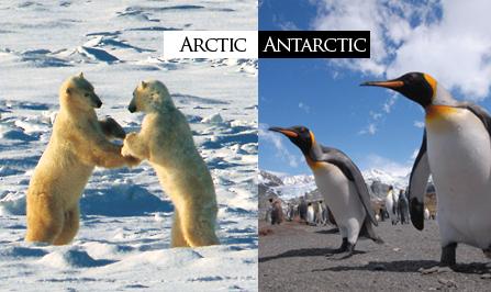 Différence entre l'arctique et l'antarctique