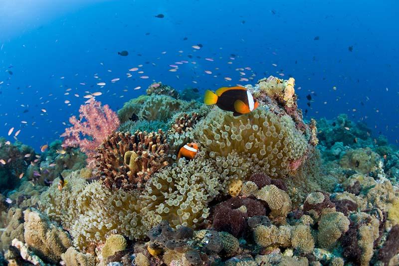 plongée sous-marine à Papouasie-Nouvelle-Guinée