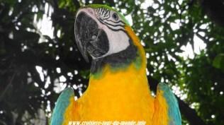 Escale à Cartagena en Colombie un péroquet au zoo du terminal de croisière