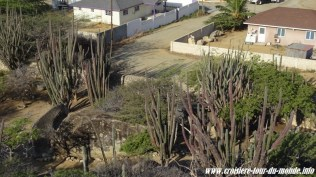 Escale à Oranjestad Aruba vue depuis Casi Bari et ses diorites