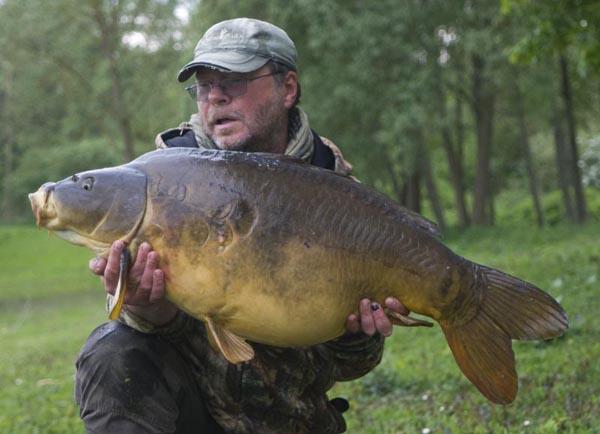 Forty pound mirror carp