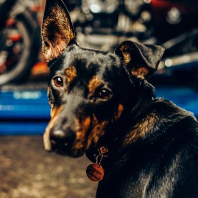 croix-rousse-moto-chien