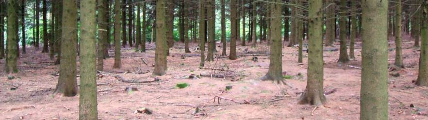 Bois Jacques and the Ardennes Forest The Battle of the Bulge