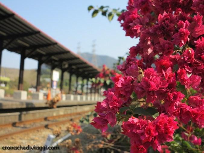 fiori+binari
