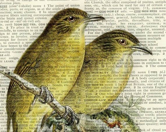 1800's Bulbul Songbird artwork, printed on page from old dictionary by FauxKiss