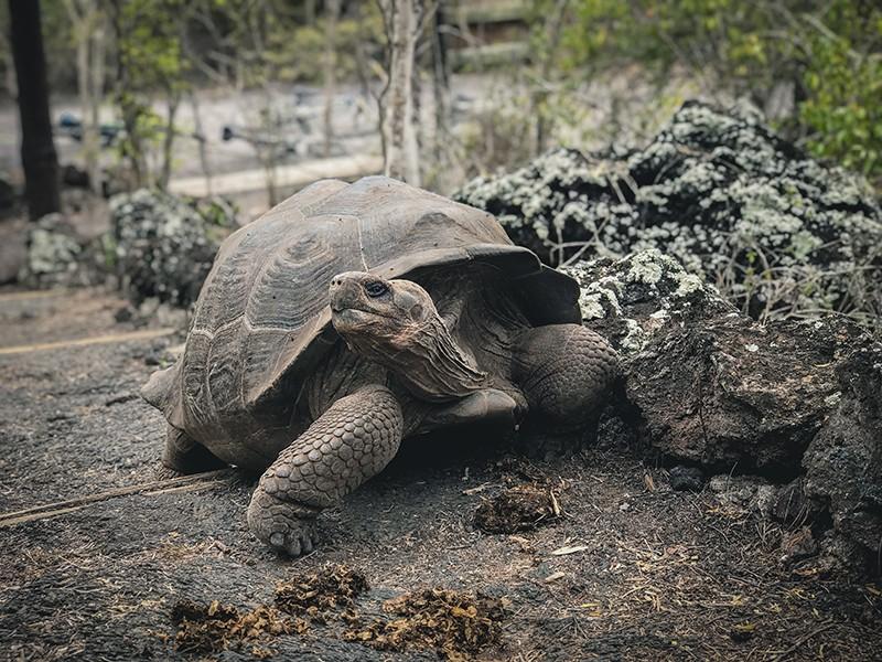 animales que ver en isla Isabela