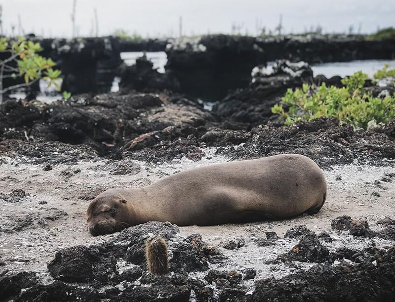 Presupuesto para viajar a Galápagos