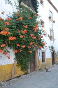 ruas floridas
