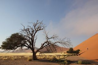 Árbol en medio del desierto, visita al desierto de Namib