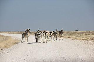 Cebras en la carretera durante nuestra visita a Etosha
