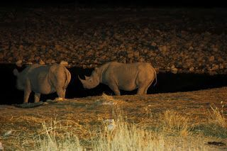 Rinocerontes durante nuestra visita a Etosha