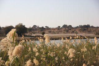 río Okavango y Angola justo delante