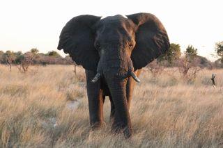 Primer plano de un elefante que se acerca al coche